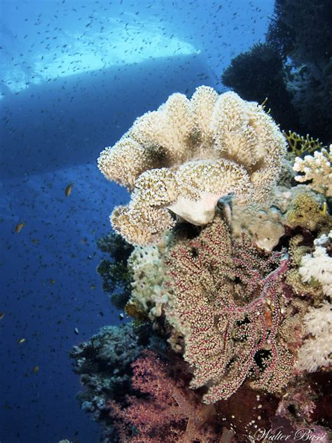 Diving – MHM Marine Services